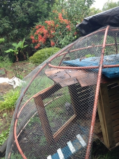 Coop in the chook dome