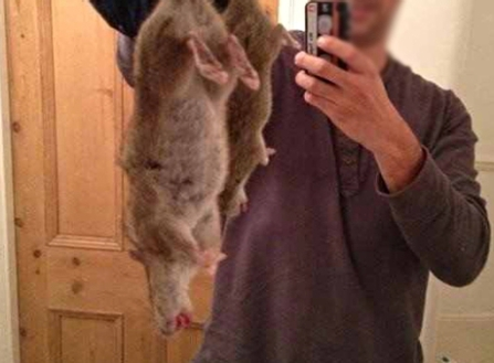 A giant rat caught in Liverpool.