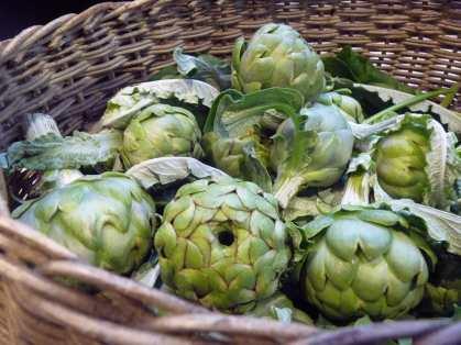 A previous year's globe artichoke harvest