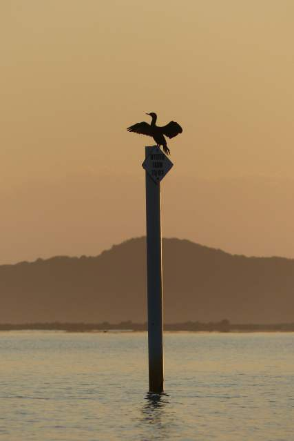 Cormorant after its dawn swim