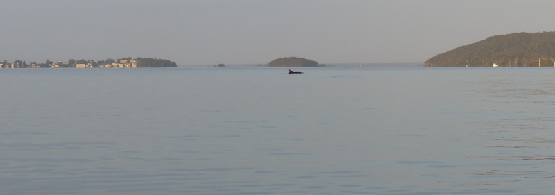 island-with-dolphin-longer-fatter